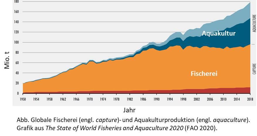 Globale Produktion in Aquakultur 2020