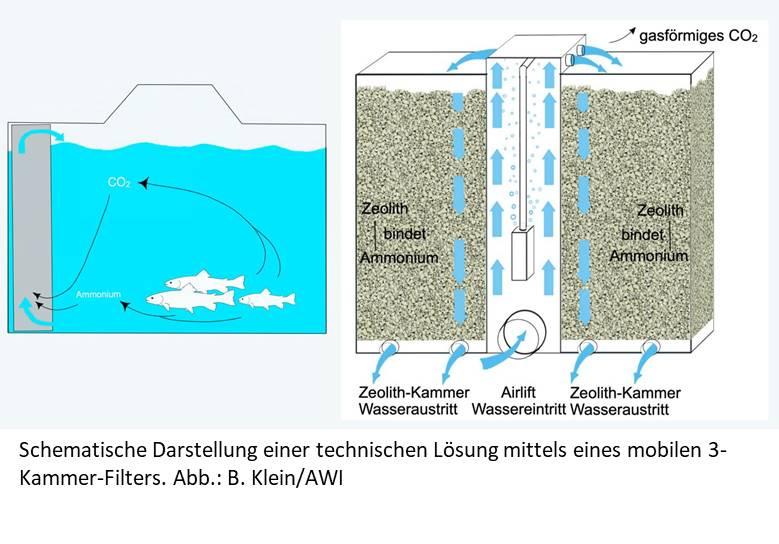 Abbildung Fischtransport