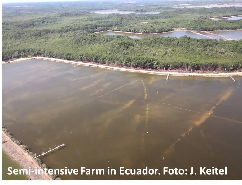 Semi-intensive Aquakultur in Ecuador